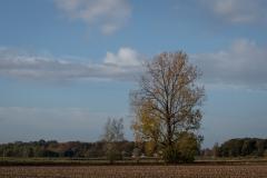 Het verhaal van een boom