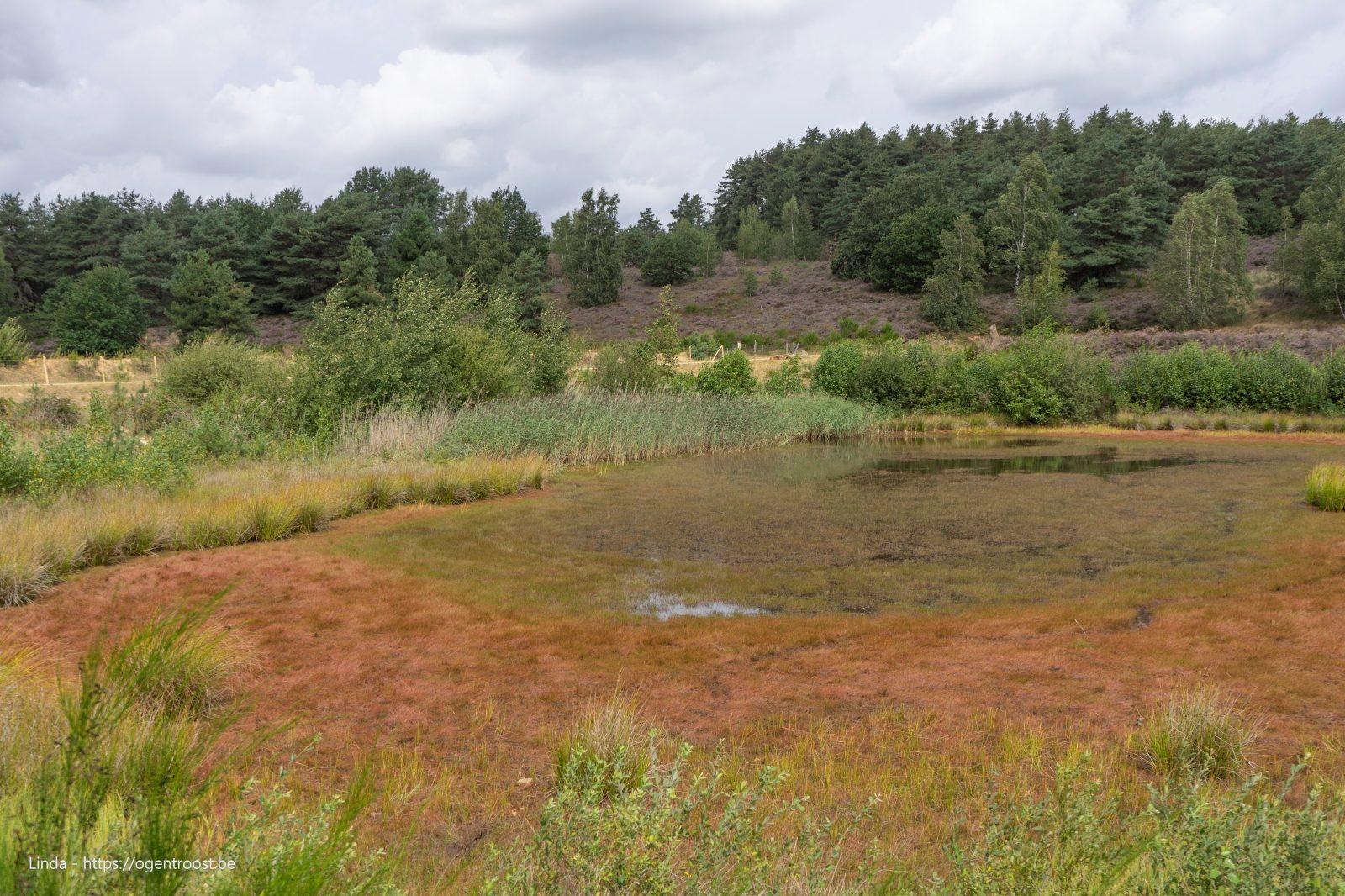 Mechelse Heide