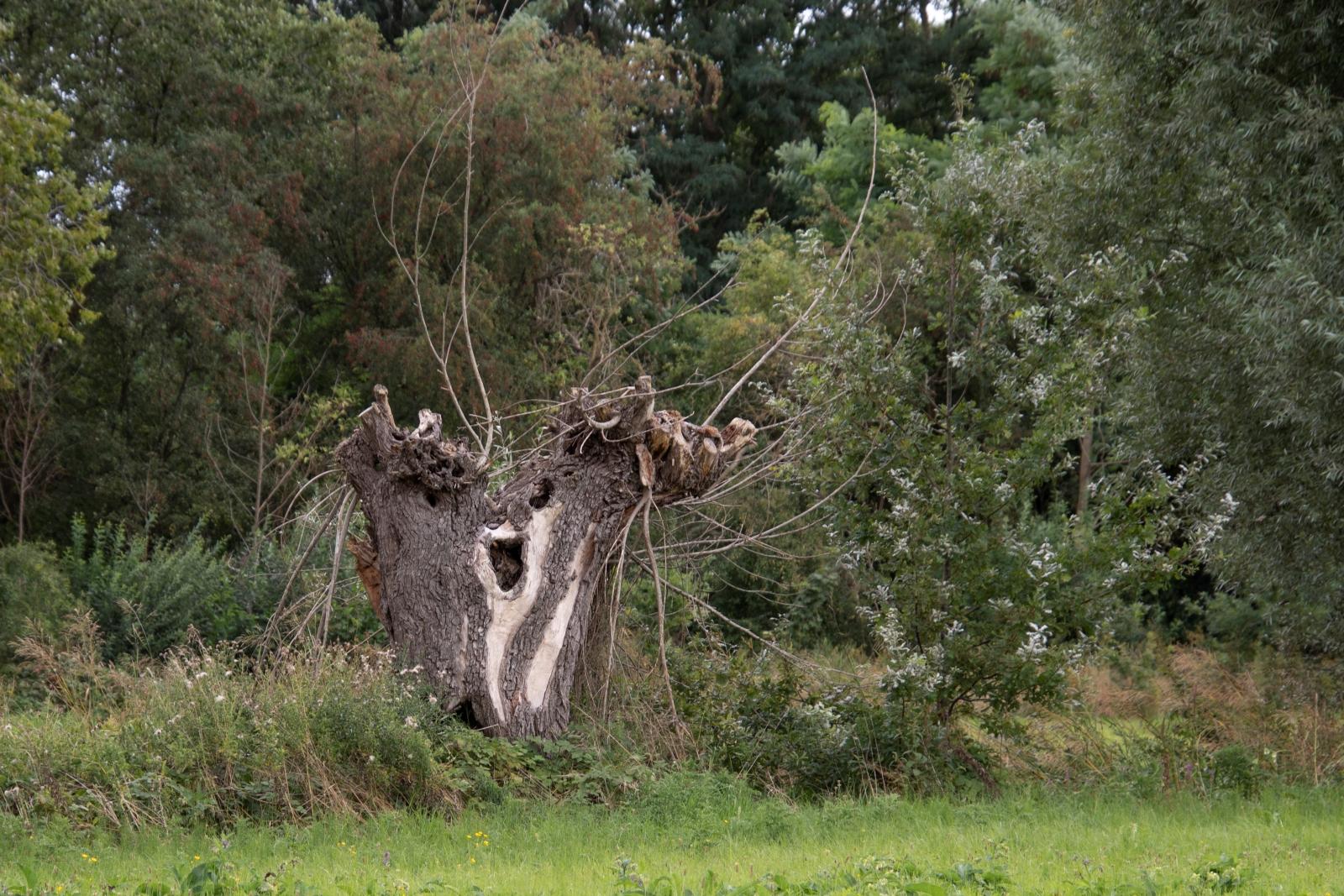 Gezicht in boom