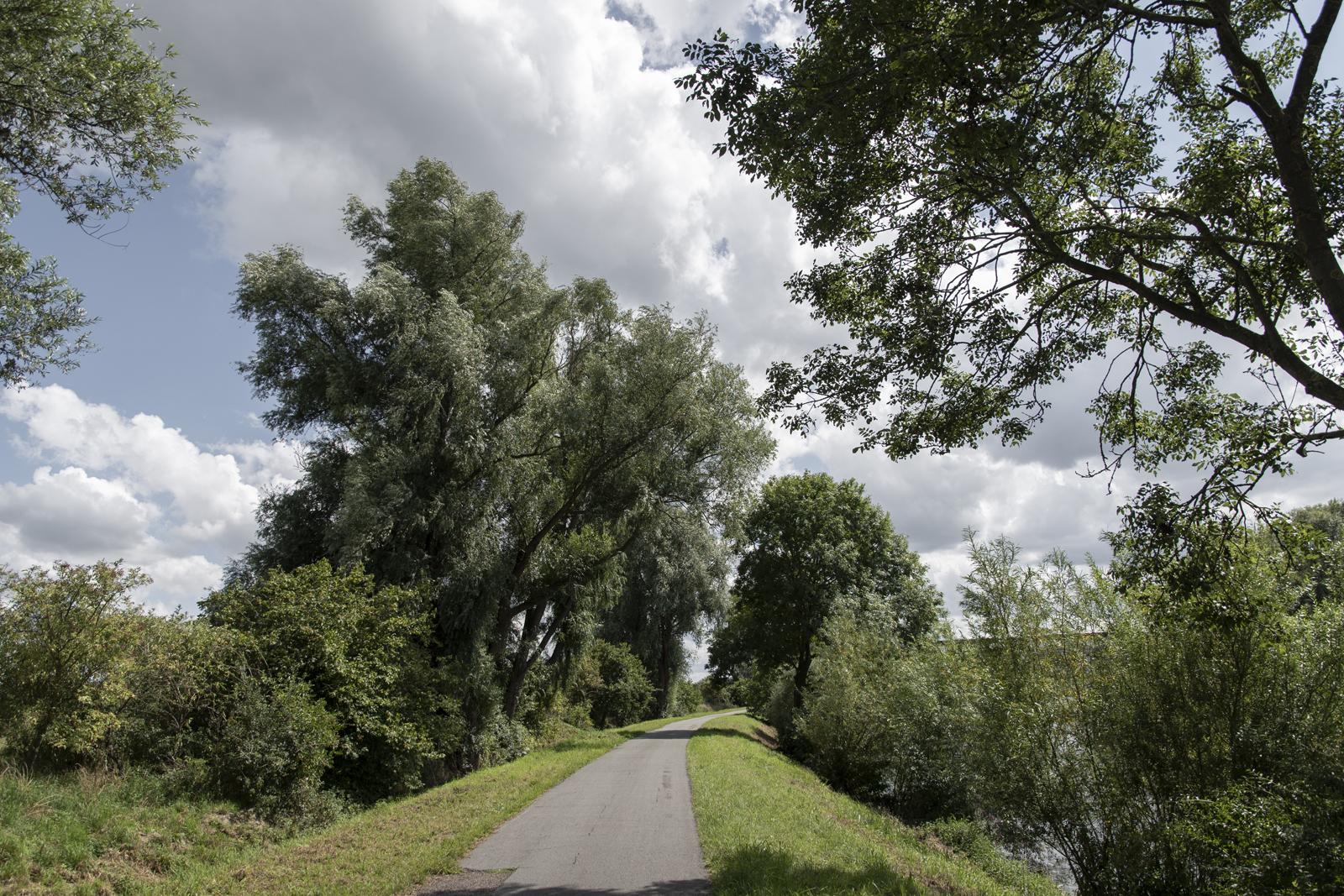 Trekweg langs de Schelde