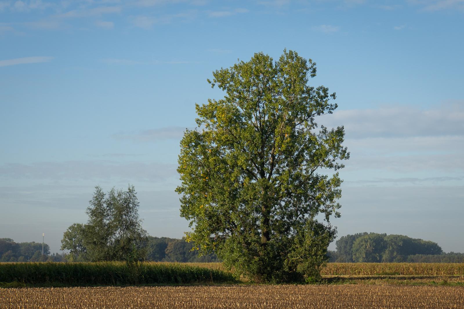 Herfst hangt mild in de lucht.