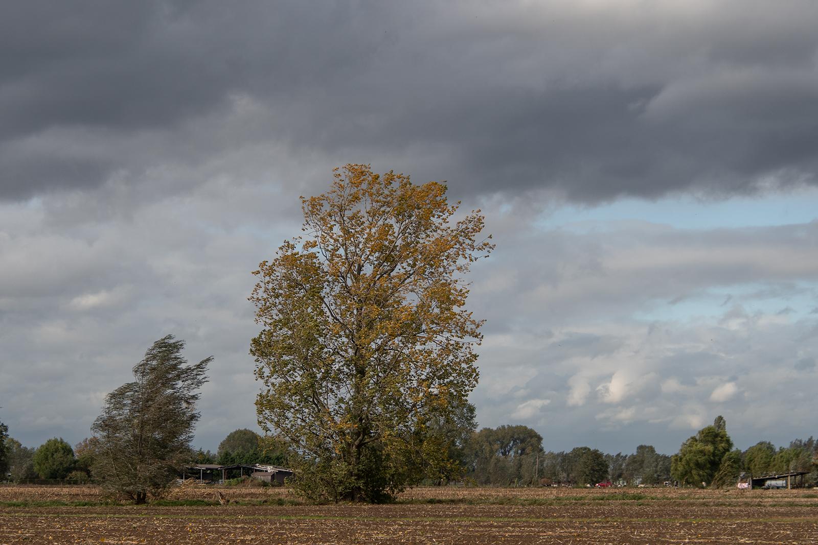 21 oktober: de wind rukt aan de takken en bladeren dansen in het rond.