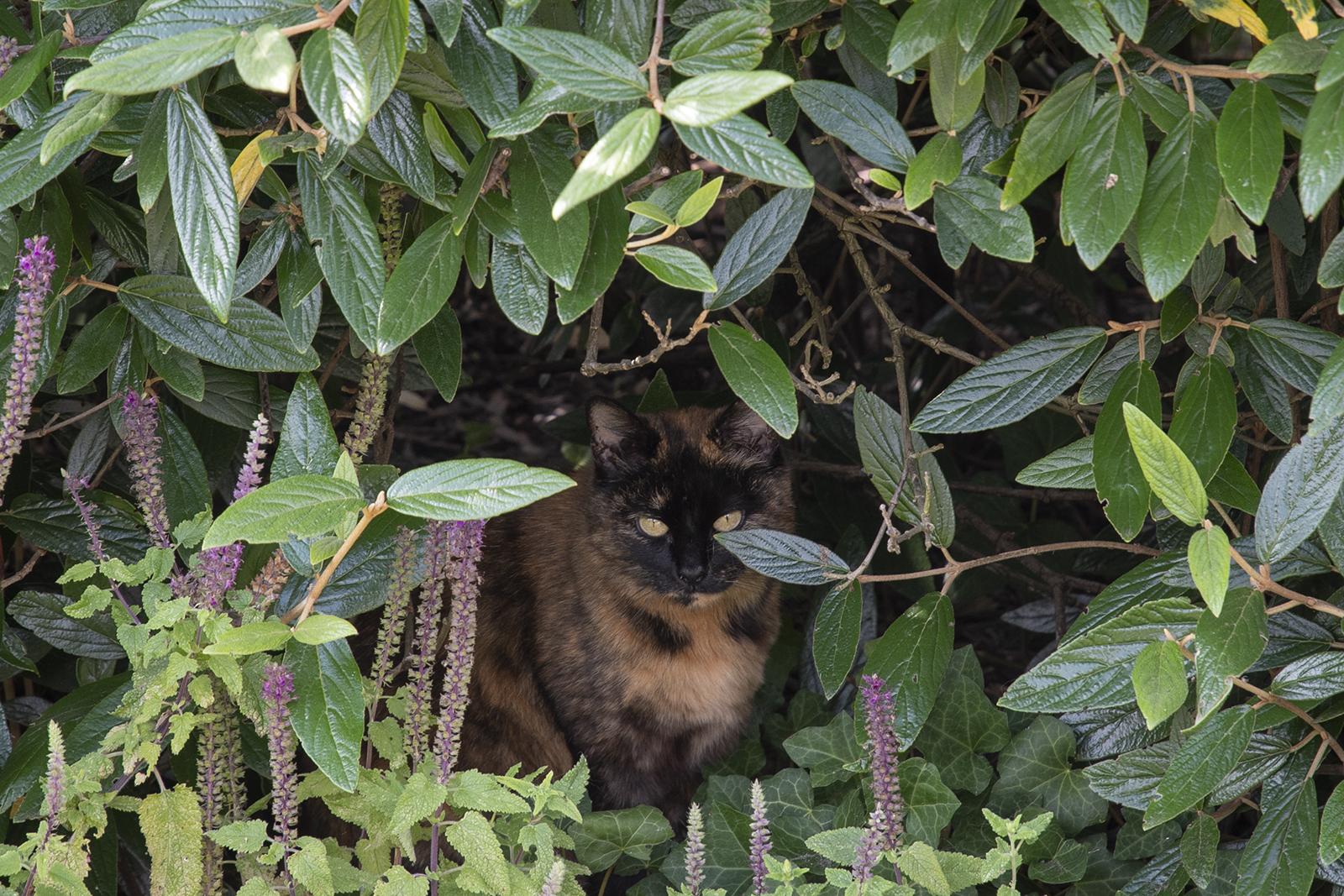 Kat in haar schuilplekje